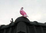 Bouwplaats Bosrijk op 7 maart 2009